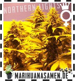 medizinisches cannabis kaufen